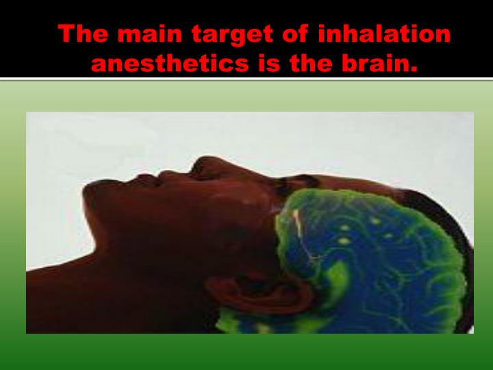 The main target of inhalation anesthetics is the brain.