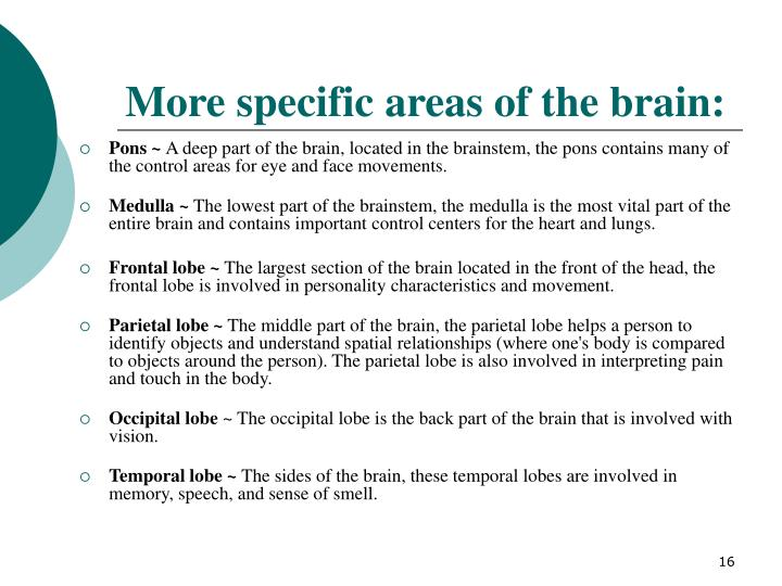 More specific areas of the brain: