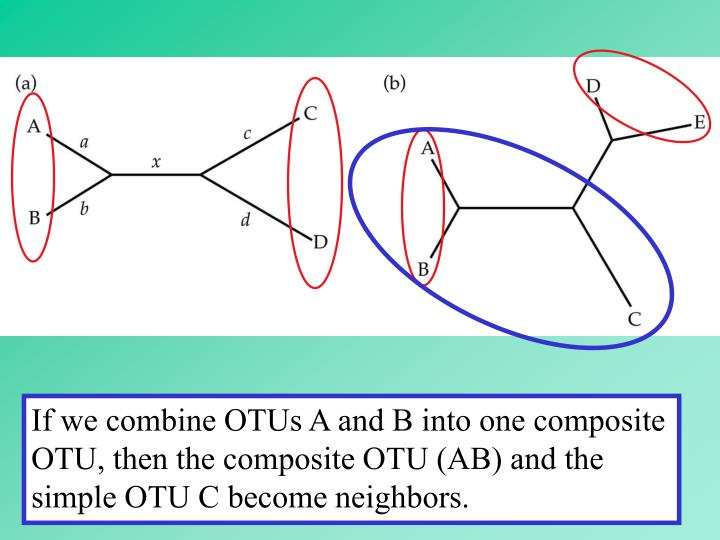 If we combine OTUs A and B into one composite OTU, then the composite OTU (AB) and the simple OTU C become neighbors.
