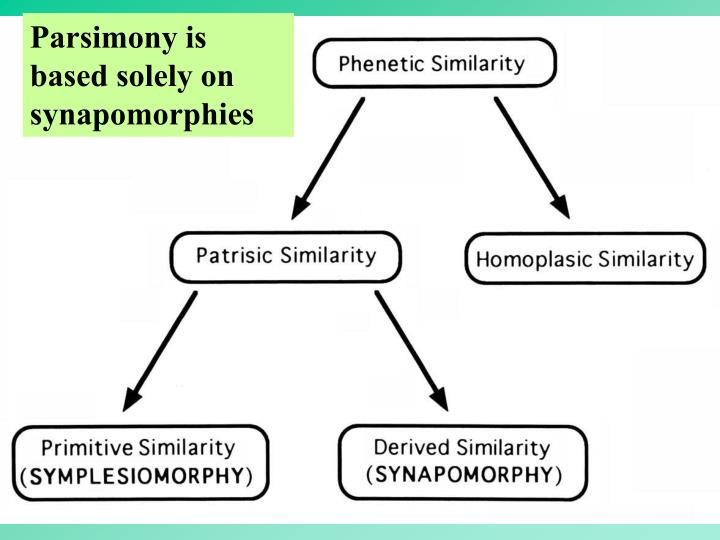 Parsimony is based solely on synapomorphies