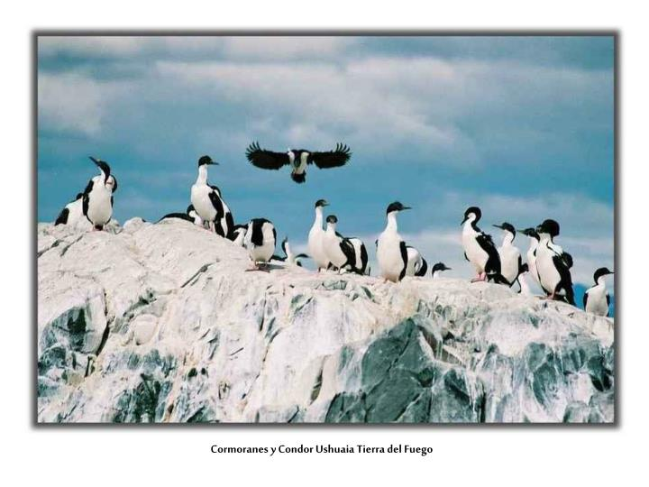 Cormoranes y Condor Ushuaia Tierra del Fuego