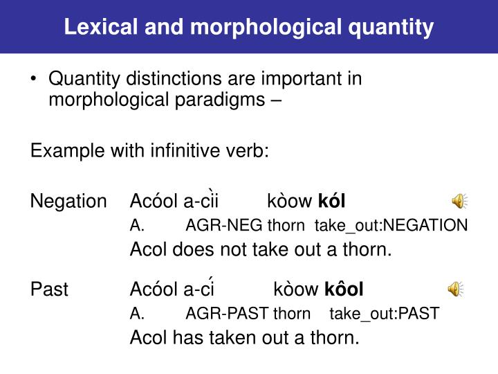 Lexical and morphological quantity