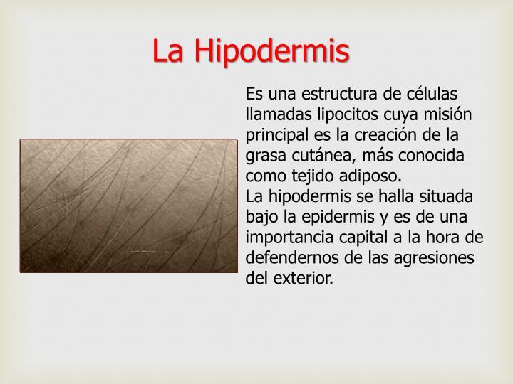 La Hipodermis