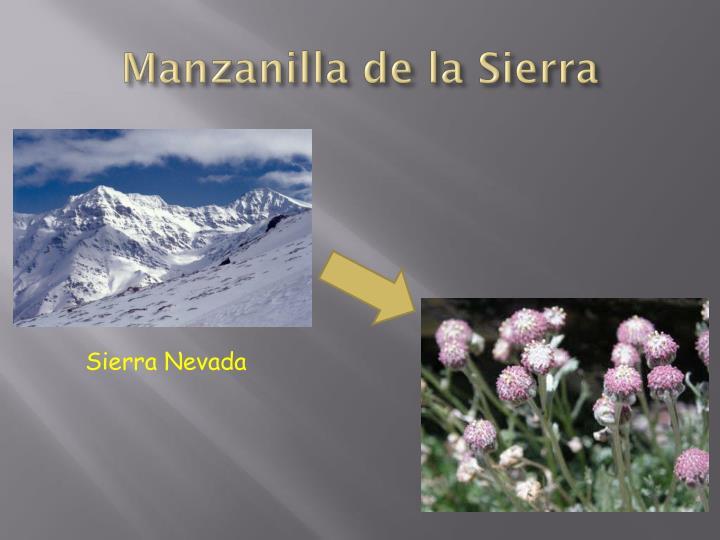 Manzanilla de la Sierra