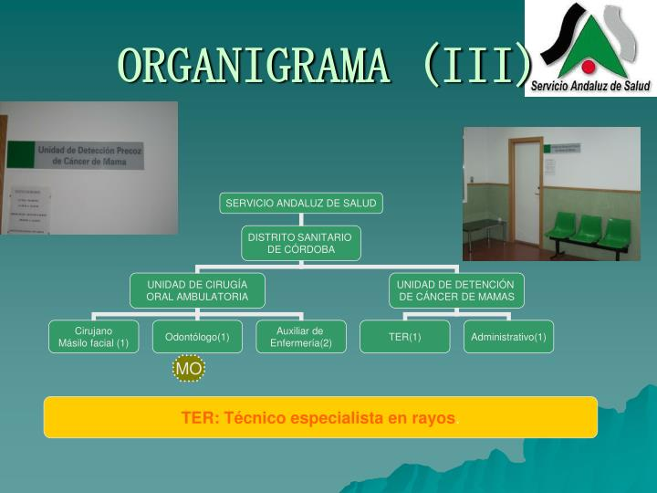 ORGANIGRAMA (III)