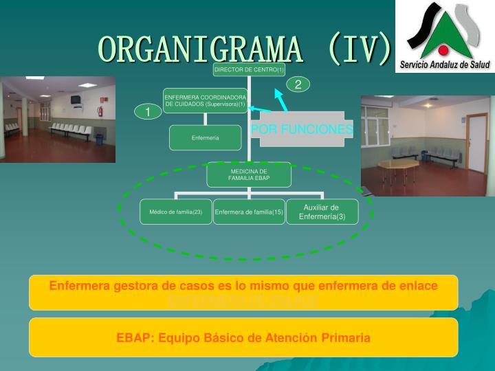 ORGANIGRAMA (IV)