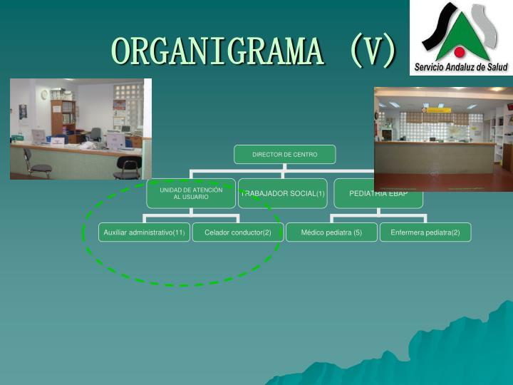ORGANIGRAMA (V)