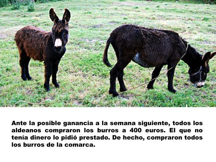 Ante la posible ganancia a la semana siguiente, todos los aldeanos compraron los burros a 400 euros. El que no tenía dinero lo pidió prestado. De hecho, compraron todos los burros de la comarca.
