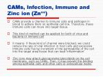 cams infection immune and zinc ion zn