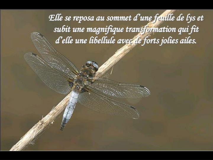 Elle se reposa au sommet d'une feuille de lys et subit une magnifique transformation qui fit d'elle une libellule avec de forts jolies ailes.