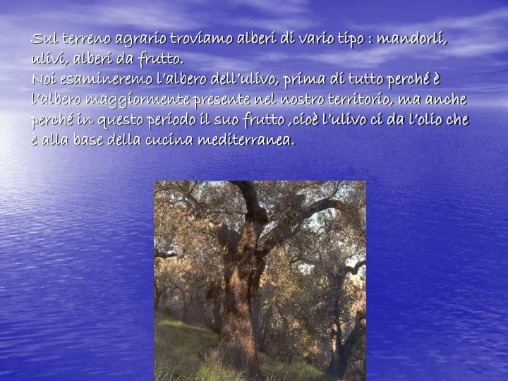 Sul terreno agrario troviamo alberi di vario tipo : mandorli, ulivi, alberi da frutto.