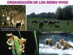 organizaci n de los seres vivos
