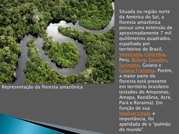 Situada na região norte da América do Sul, a floresta amazônica possui uma extensão de aproximadamente 7 mil quilômetros quadrados, espalhada por territórios do Brasil,
