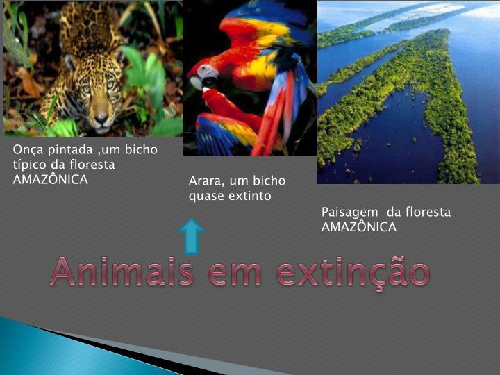 Onça pintada ,um bicho típico da floresta AMAZÔNICA