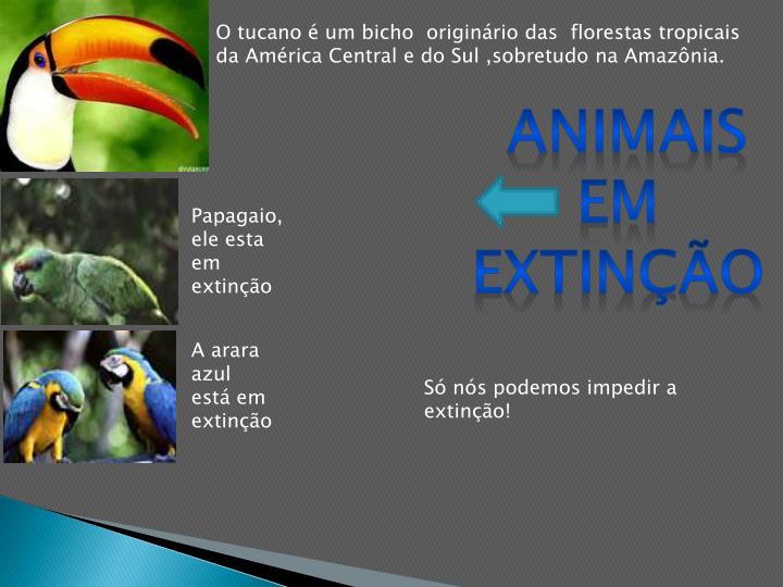 O tucano é um bicho  originário das  florestas tropicais da América Central e do Sul ,sobretudo na Amazônia.