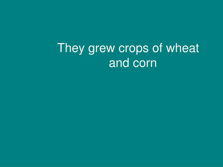 They grew crops of wheat and corn