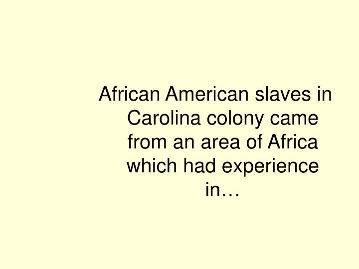 African American slaves in Carolina colony came from an area of Africa which had experience in…