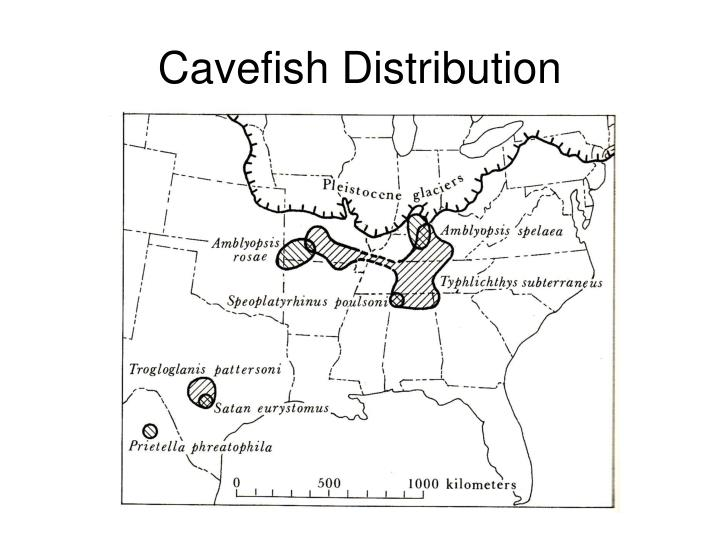 Cavefish Distribution