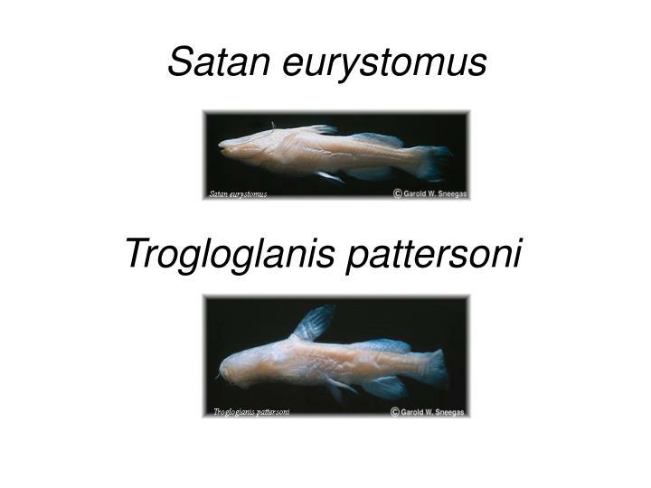 Satan eurystomus
