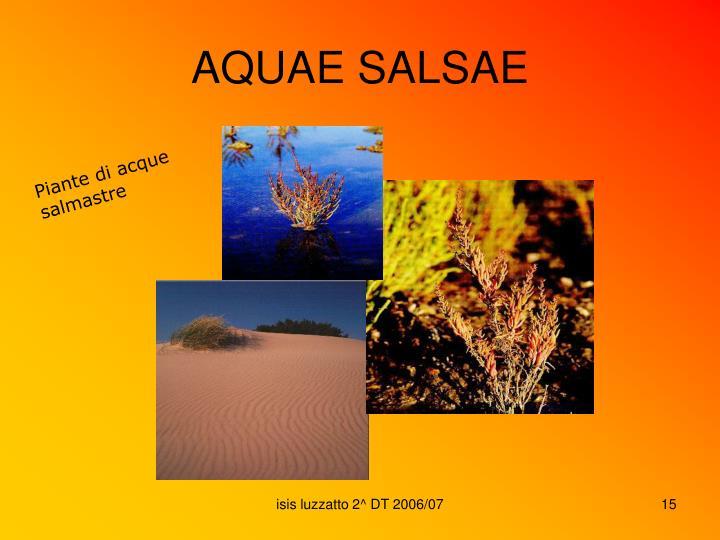 AQUAE SALSAE