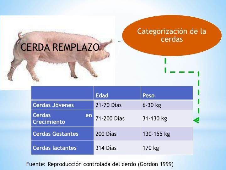 Fuente: Reproducción controlada del cerdo (Gordon 1999)