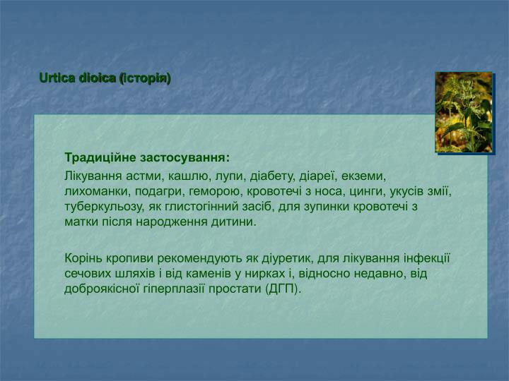 Urtica dioica (