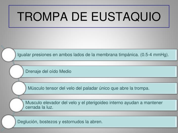 TROMPA DE EUSTAQUIO