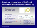 structural comparison of ccp and mutated citrullinated vimentin mcv