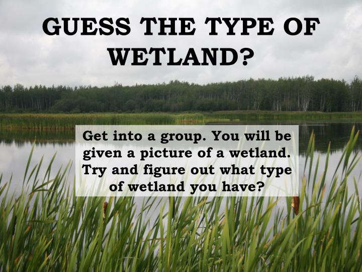 GUESS THE TYPE OF WETLAND?
