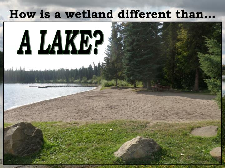 How is a wetland different than…