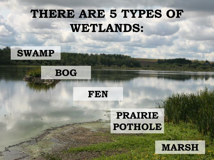 THERE ARE 5 TYPES OF WETLANDS: