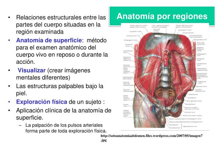 Anatomía por regiones