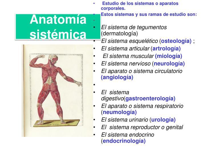 Anatomía sistémica