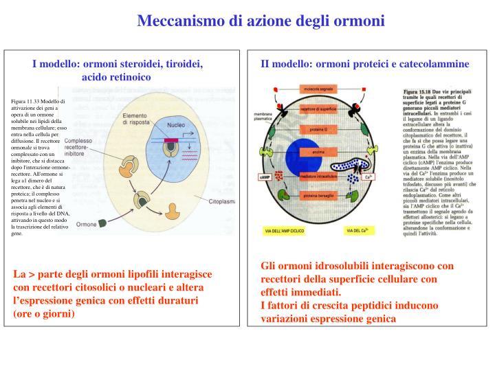 Meccanismo di azione degli ormoni