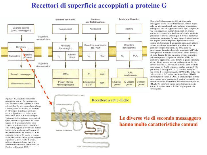 Recettori di superficie accoppiati a proteine G