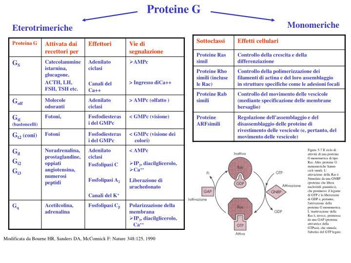 Proteine G