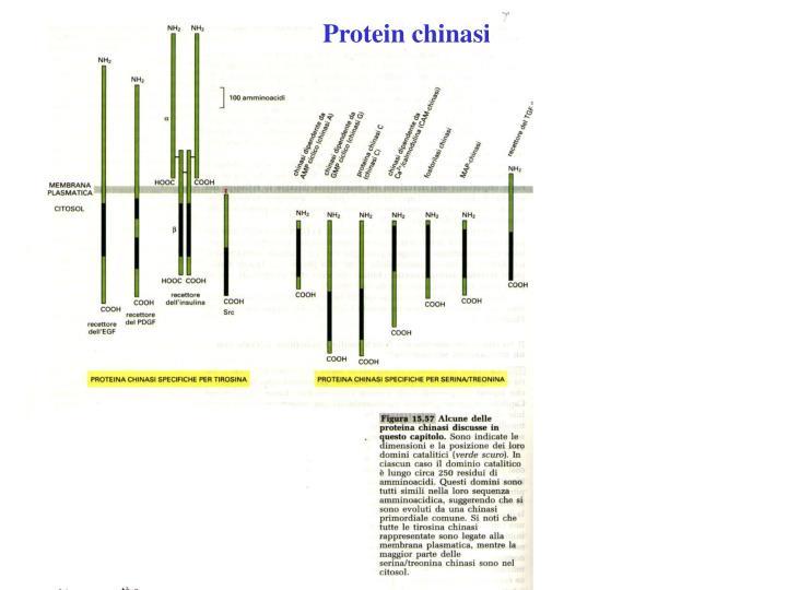 Protein chinasi