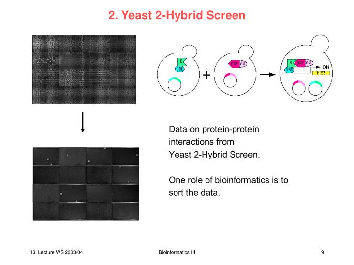 2. Yeast 2-Hybrid Screen