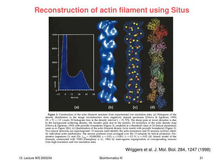 Reconstruction of actin filament using Situs