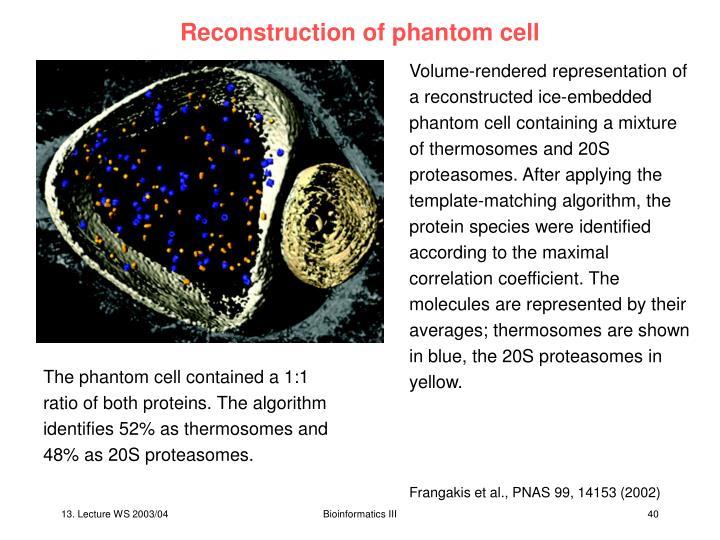 Reconstruction of phantom cell