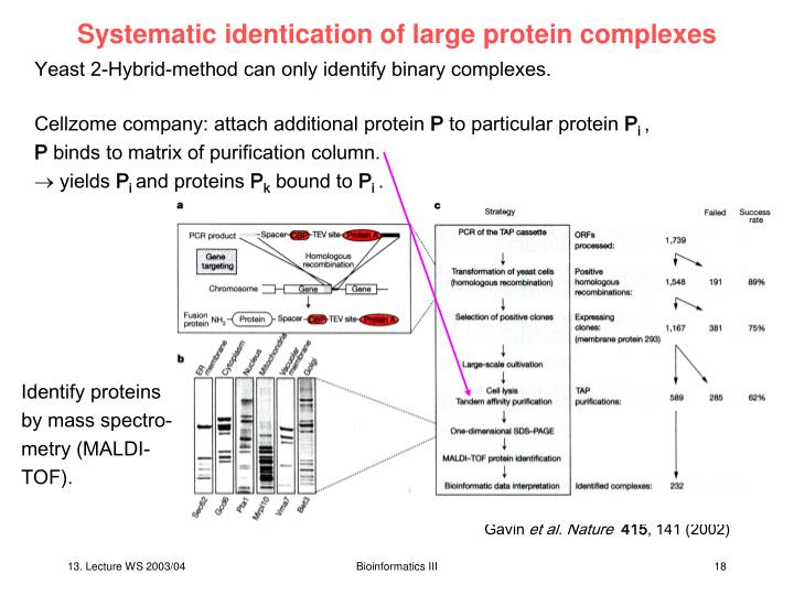 Systematic identication of large protein complexes