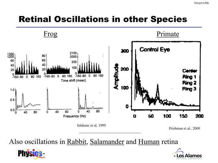 Retinal Oscillations in other Species