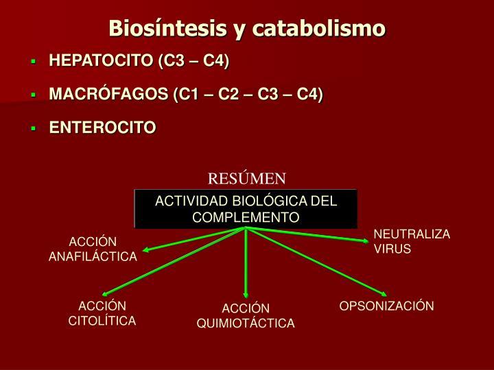 Biosíntesis y catabolismo