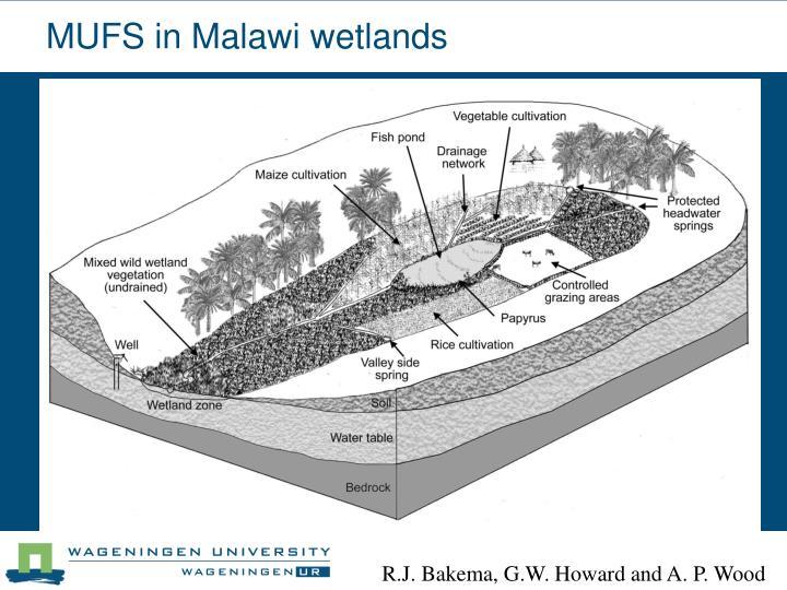 MUFS in Malawi wetlands