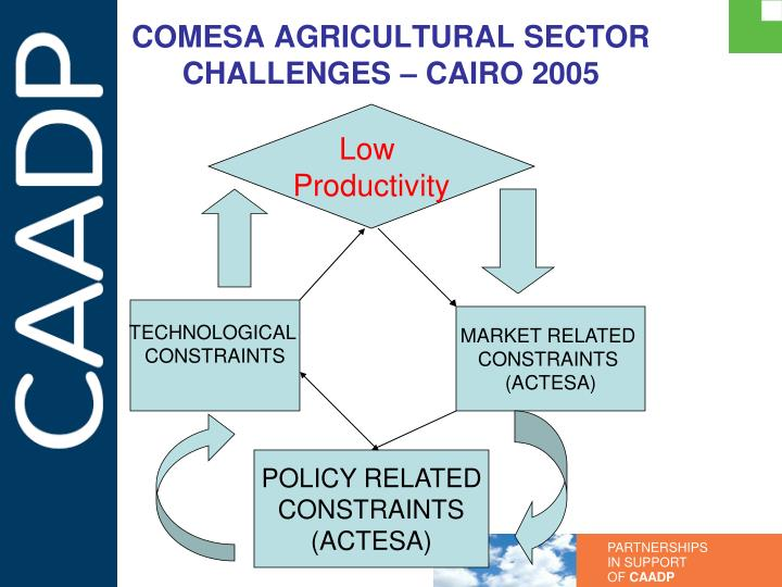 COMESA AGRICULTURAL SECTOR CHALLENGES – CAIRO 2005