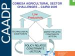 comesa agricultural sector challenges cairo 2005
