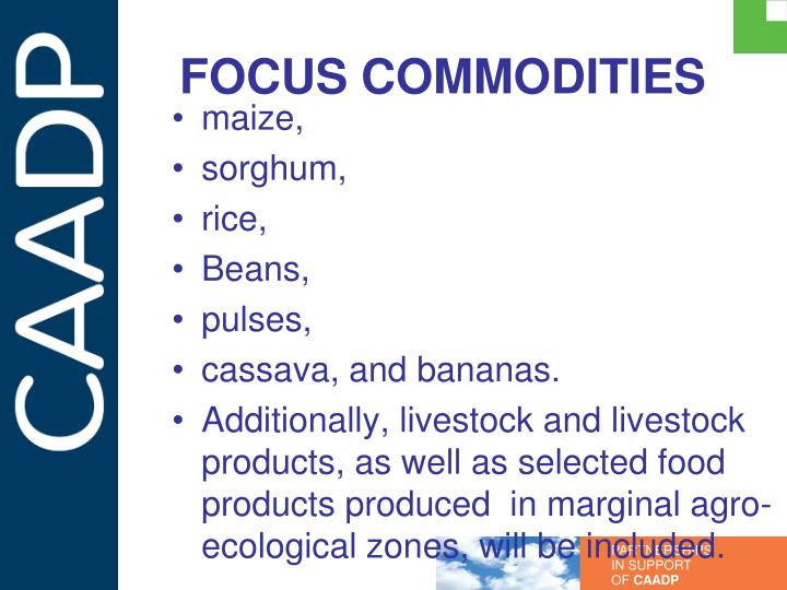 FOCUS COMMODITIES