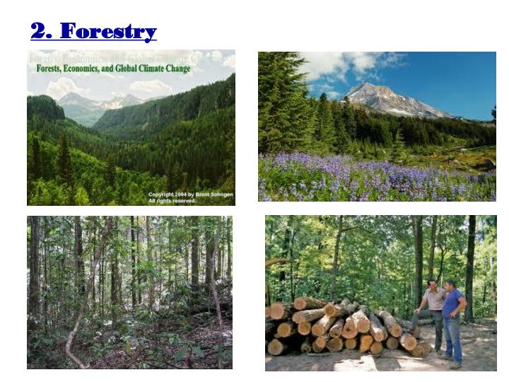 2. Forestry