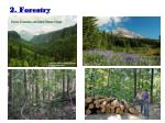 2 forestry
