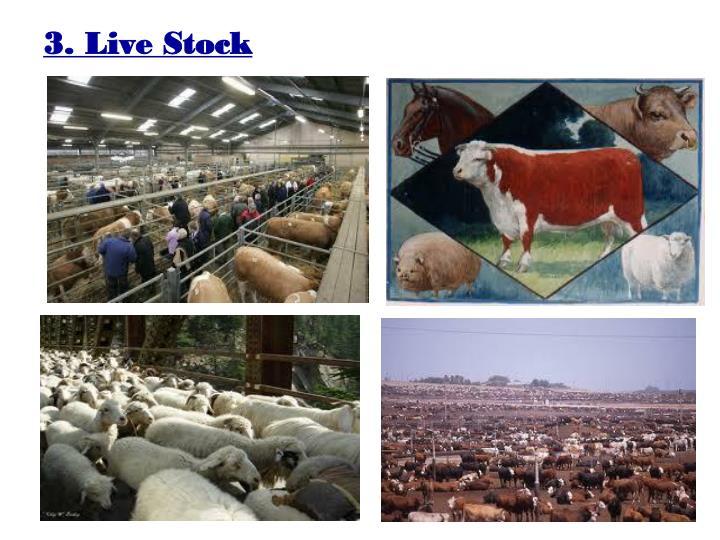 3. Live Stock